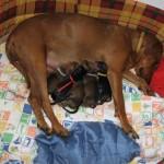 po-porodu
